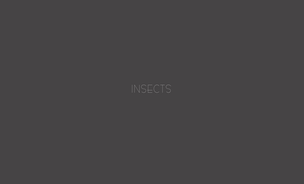Insect 0